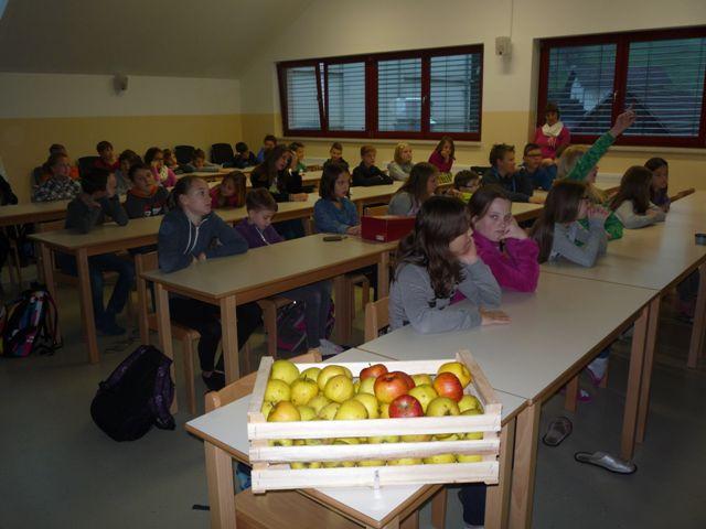 shema-solskega-sadja-7